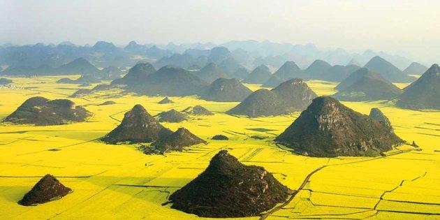 Valleys of Rapeseed